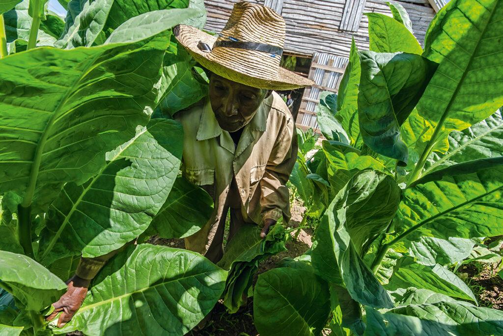 Zigarrenland Kuba – Wo Mythen wahr werden